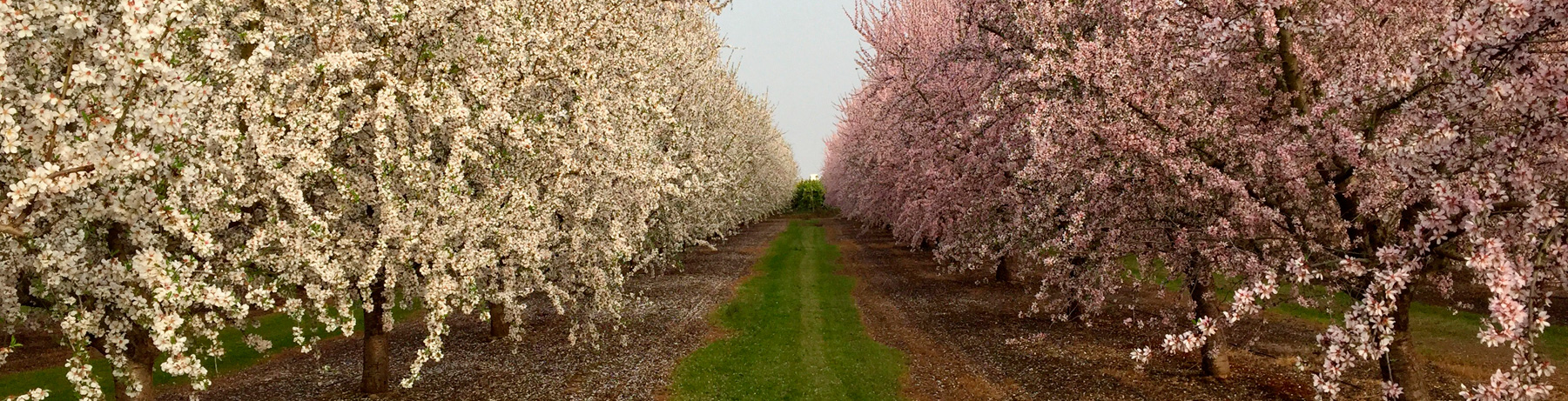 Agroindustria - Grupo Jannone